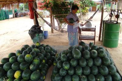 Арбузы на рынке от 15 бат за кг