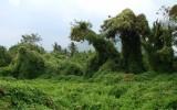 Тайские Динозавры