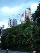 Дома в джунглях